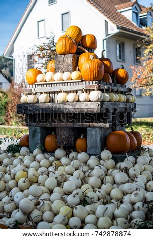 Pyramid of orange and white pumpkins.Autumn decoration