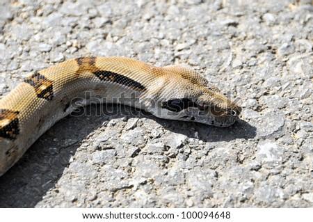 Python close up - stock photo