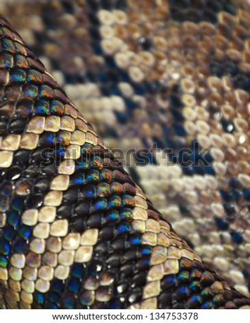 python detail - stock photo