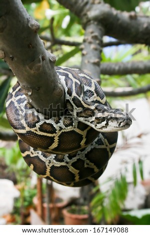 Python on a bench. - stock photo