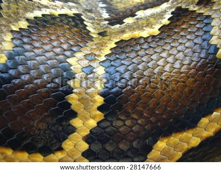 python snake skin and scales pattern macro - stock photo