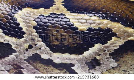 python snake skin  background  - stock photo
