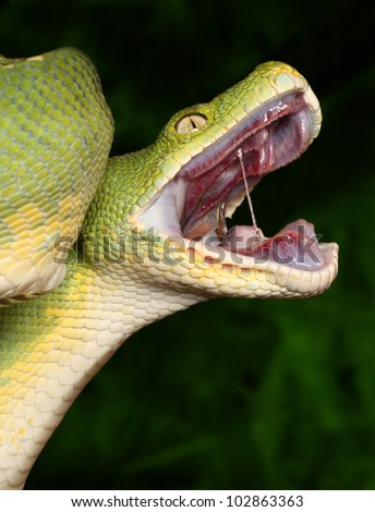 Snake Mouth Stock Imag...