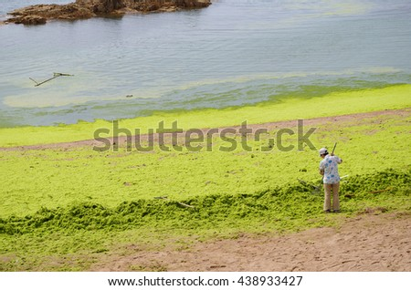 Qingdao, Shandong, China - July 28, 2015: Workers are collecting and removing sea lettuce(enteromorpha) from Badaguan Beach(Taipingwan). Water bloom (Algal bloom) results from water pollution.