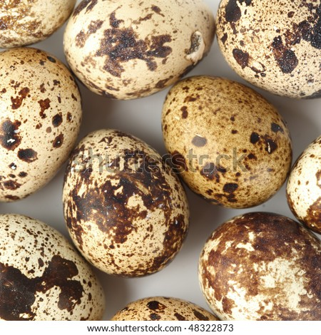 quail egg background