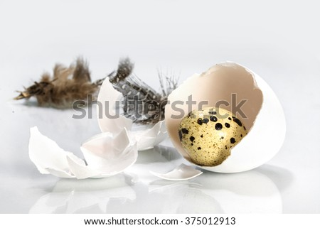 quail egg in a chicken eggshell and feathers on light gray, easter concept or metaphor for uncover the facts, close up with selected focus and narrow depth of field