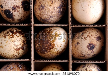 quail, egg, nobody, cut out, egg white, organic, quail's egg, quail eggs, food and drink, abundance, egg yolk, broken, quail egg, full frame, ingredient, fresh, food, cracked - stock photo