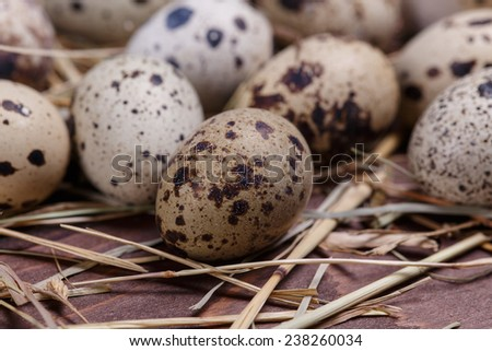 quail eggs - stock photo
