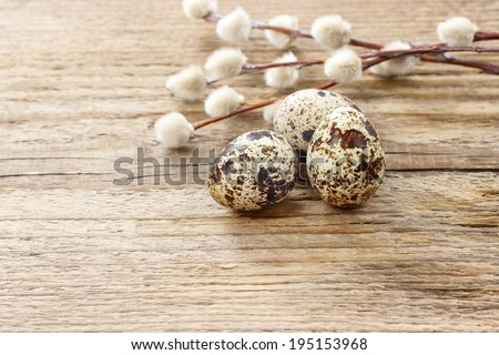 Quail eggs and catkins on rustic wooden table. Copy space - stock photo