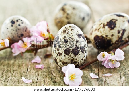quail eggs and cherry blossoms on wood