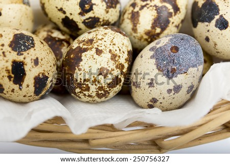 quail eggs close-up on a white background