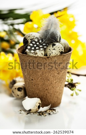quail eggs in a flower pot and easter decorations - stock photo