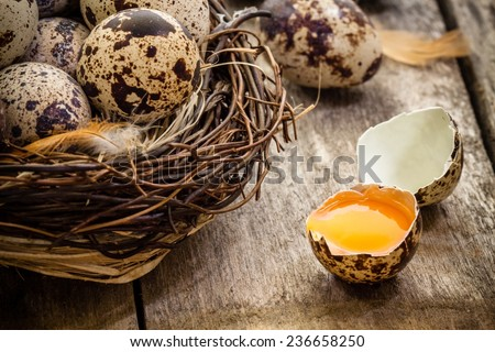 quail eggs in a nest on a dark rustic wooden background - stock photo