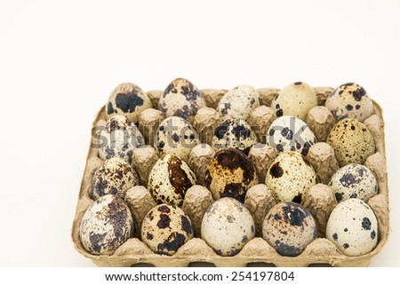 Quail Eggs in carton - stock photo