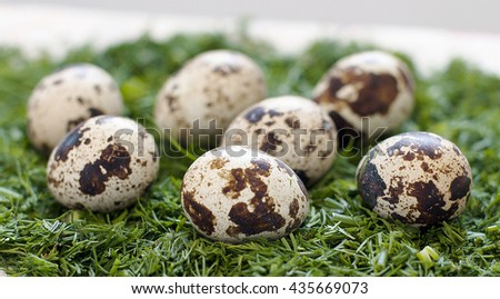 Quail eggs on a bed of chopped dill close up