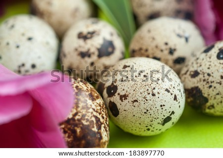 Quail eggs with petals of tulips in background.