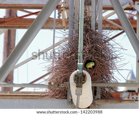 Quaker Parrot - stock photo