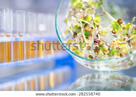 Quality control of bean sprouts for signs of bacterial or chemical contamination - stock photo