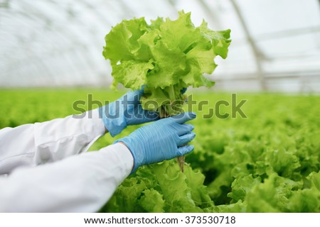 Quality control. Senior scientist or tech observes new breed of cress sprouts optimized for consumption in greenhouse. Focus on the hand - stock photo