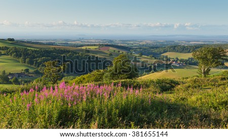 Quantock Hills Somerset England UK countryside views towards Hinkley Point Nuclear Power station and Bristol Channel on a summer evening with pink flowers.  Contrast nuclear and nature.