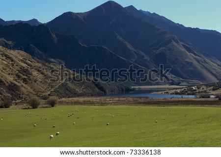 Queenstown, New Zealand - stock photo