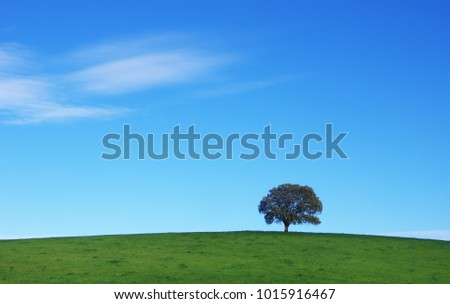 quercus tree in the field - Alentejo - Portugal