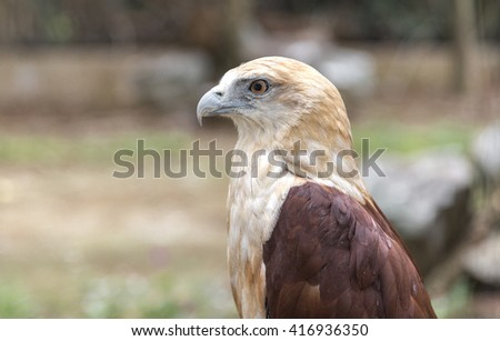 Queson, Philippines - May 3, 2016: Eagle in Queson park zoo - stock photo
