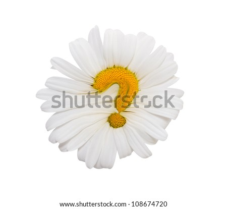 question mark, the alphabet from a camomile flower, on the white - stock photo