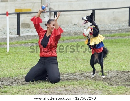 QUIMBAYA, COLOMBIA - AUGUST 12: Border Collie dog dancing and performing tricks on August 12, 2012 in Quimbaya, Colombia. Border Collie dogs are known to be one of the most intelligent dog breeds.