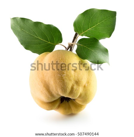 quince isolated on the white background