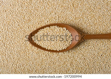 Quinoa Real on a wooden spoon - stock photo