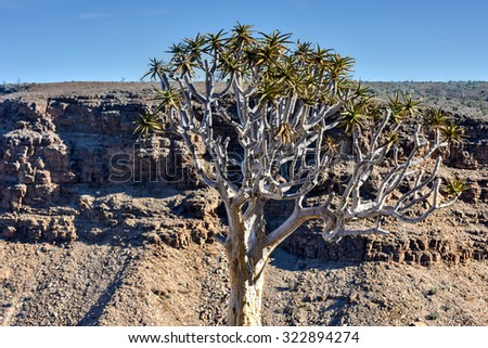 Quiver Tree and the Fish River Canyon in Namibia, Africa. It is the largest canyon in Africa. - stock photo
