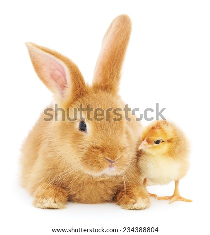 Rabbit and chicken isolated on a white background  - stock photo