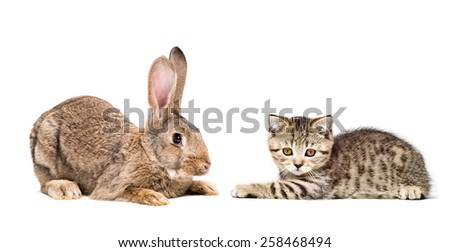 Rabbit and kitten lying down together isolated on white background - stock photo