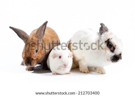 rabbit and rat family - stock photo