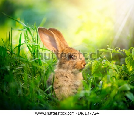 Rabbit. Beauty Art Design of Cute Little Easter Bunny in the Meadow. Spring Flowers and Green Grass. Sunbeams - stock photo
