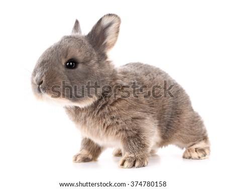 Rabbit bunny baby isolated on white background - stock photo