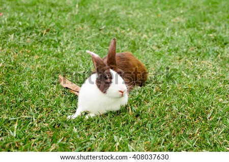 Rabbit bunny cute on the grass in Summer.