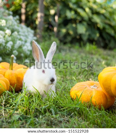Rabbit bunny cute on the grass outdoors. - stock photo