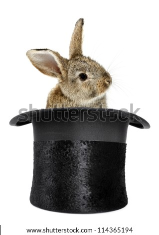Rabbit bunny in top hat magic trick isolated - stock photo