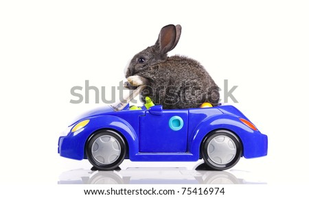 Rabbit driving a blue toy car (isolated on white) - stock photo