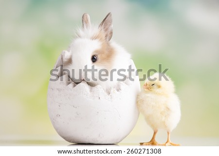 Rabbit. Easter chickens.  - stock photo
