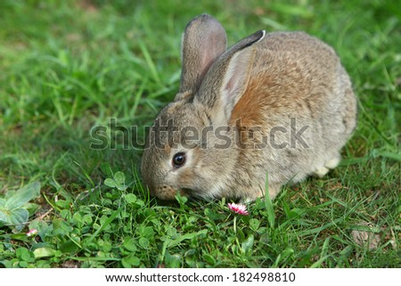 rabbit eating grass in the garden