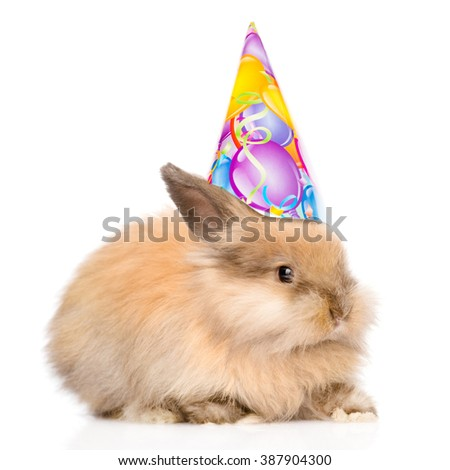 Rabbit in birthday hat l looking at camera. isolated on white background