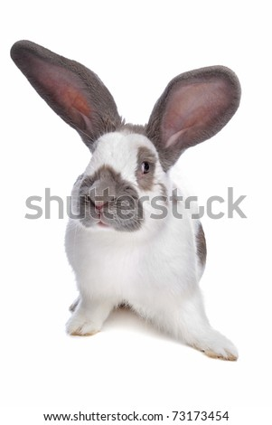 rabbit in front of a white background