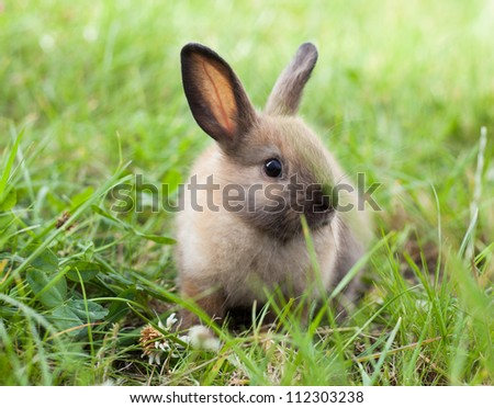 Rabbit in grass - stock photo