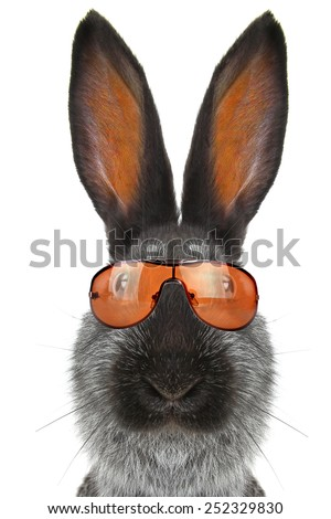 rabbit in sunglasses on a white background - stock photo