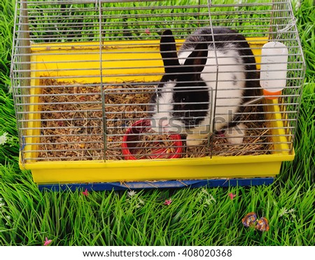 Rabbit in the cell on green grass