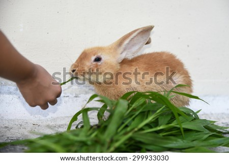 Rabbit is eating rabbit feed and grass. Little girl feeding her pet. - stock photo