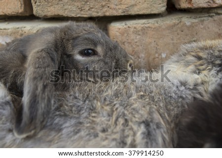 rabbit lay down on ground